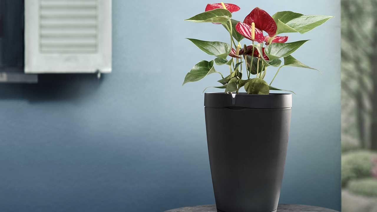 Parrot Pot: il vaso intelligente che si prende cura delle piante durante le vacanze thumbnail