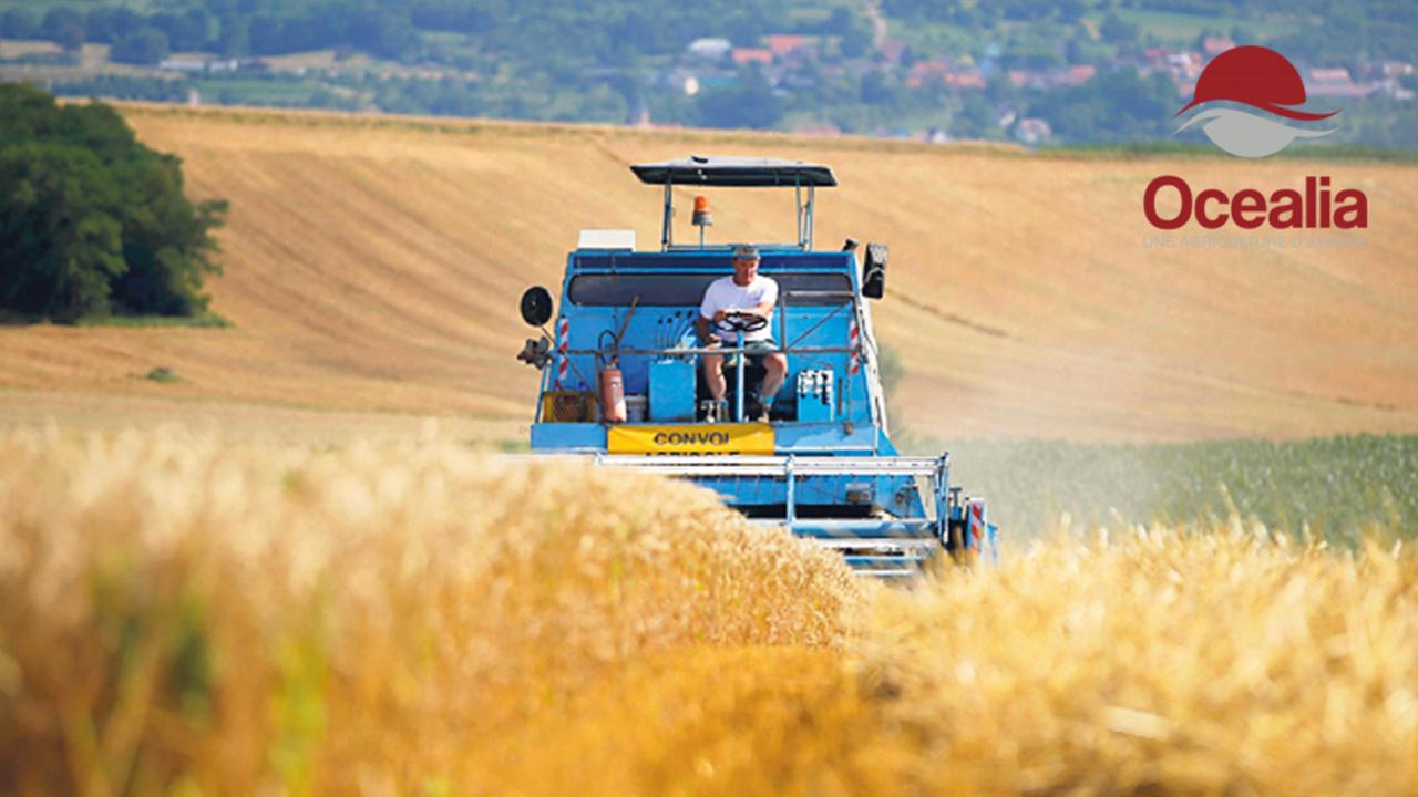 Come i droni stanno cambiando l'agricoltura thumbnail