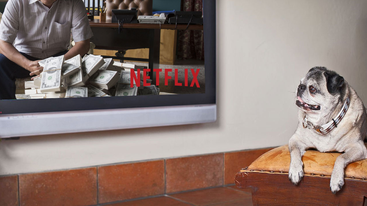 Il partner perfetto per una serata con Netflix? Il vostro amico a quattro zampe thumbnail