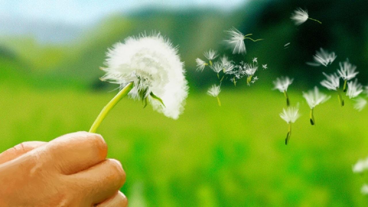 Primavera in arrivo: ecco i consigli di MioDottore contro le allergie thumbnail