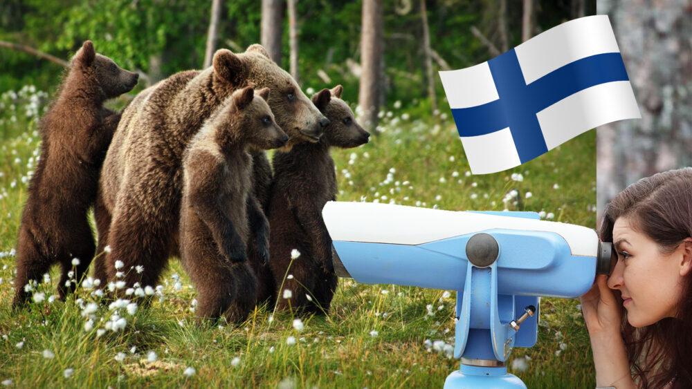 viaggio finlandia orsi