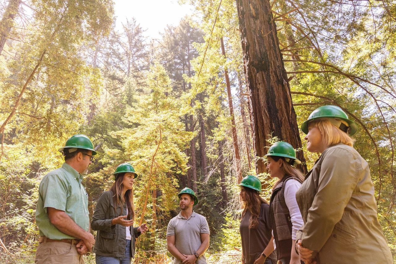 HP e WWF uniti per la protezione e la rigenerazione delle foreste thumbnail