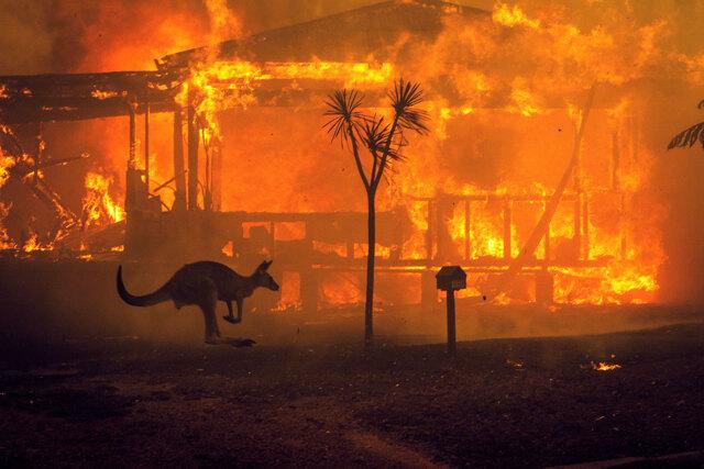 destiny 2 campagna fondi contro incendi Australia