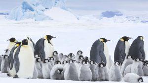 E se potessi contare i pinguini dell'Antartide con l'AI?