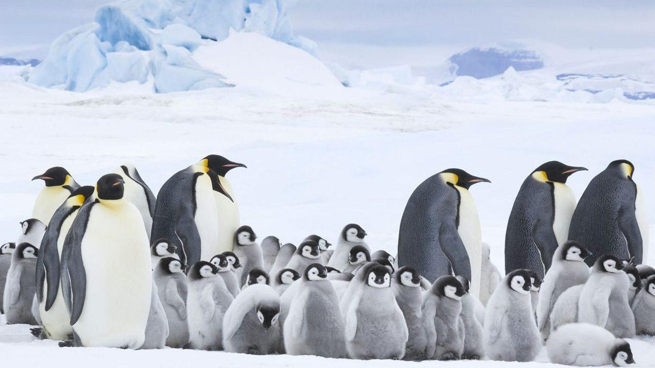 E se potessi contare i pinguini dell'Antartide con l'AI? thumbnail