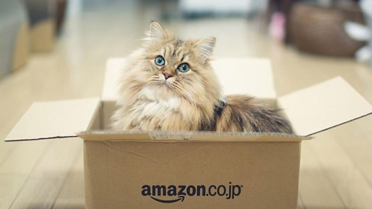 Amazon rilascia Lifelong Grain free per i nostri animali thumbnail