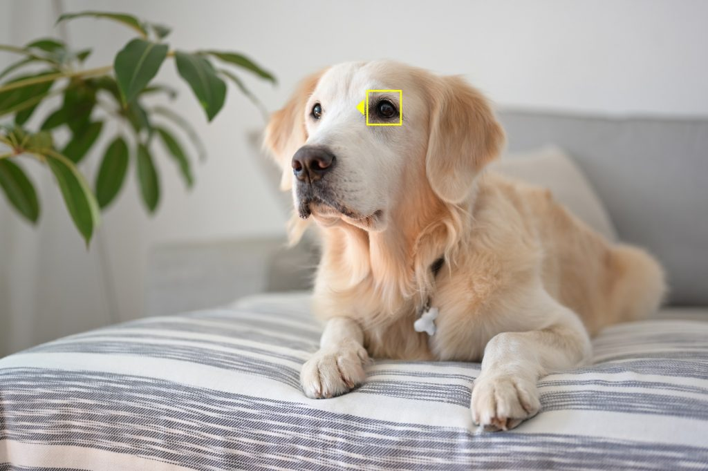 Nikon AF Animal Detection