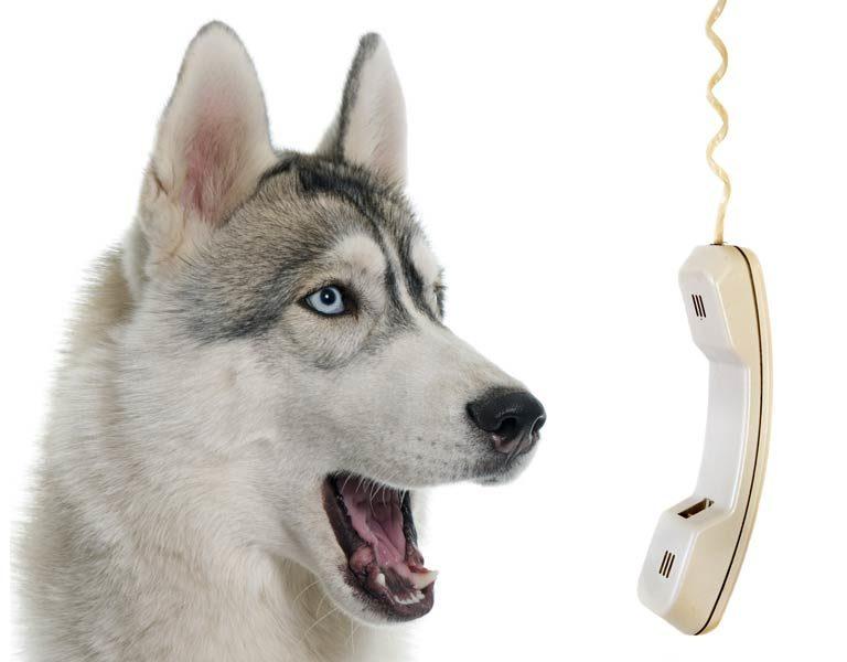 veterinario online telefono