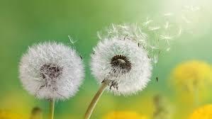 rimedi naturali allergia polline