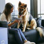 veterinario telefono