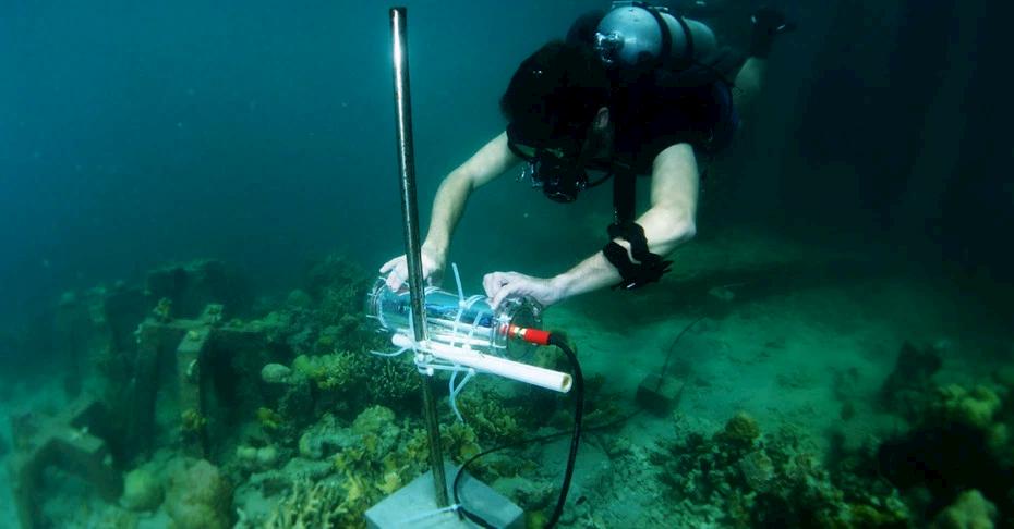 Intel barriera corallina AI Project Corail foto