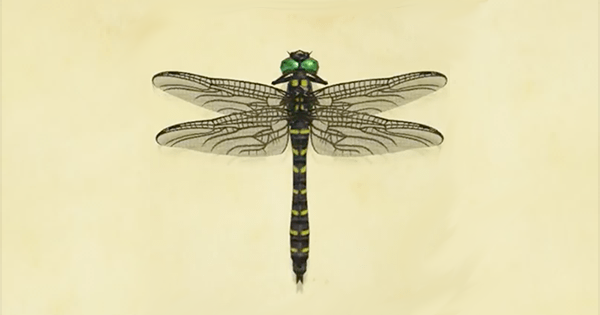 Libellula Striata Animal Crossing New Horizons