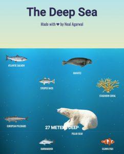 the-deep-sea