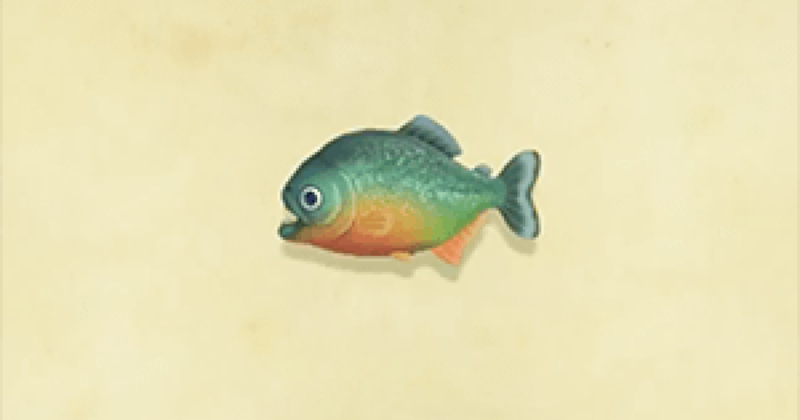 Piranha Animal Crossing New Horizons
