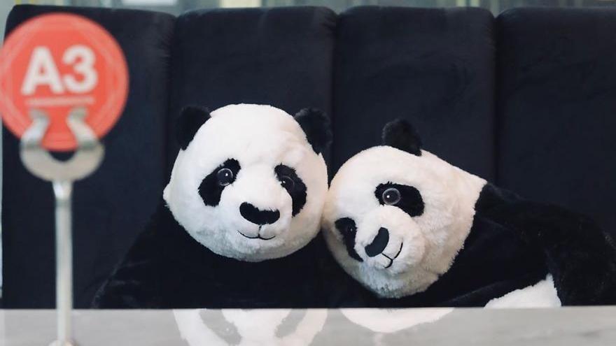 Thailandia, panda di peluche per il distanziamento sociale al ristorante thumbnail