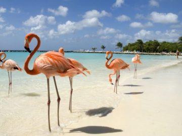 aruba isola vacanza