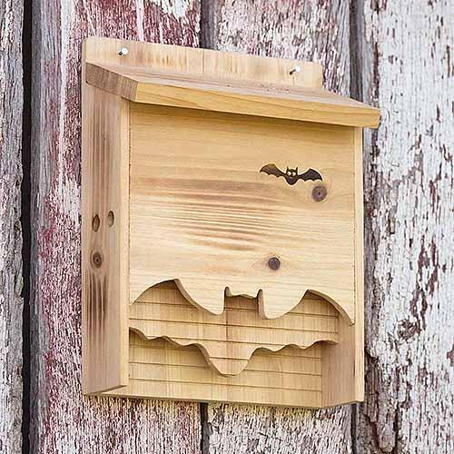 casetta pipistrello antizanzare