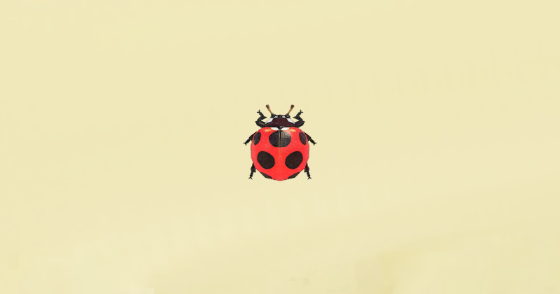 coccinella animal crossing new horizons
