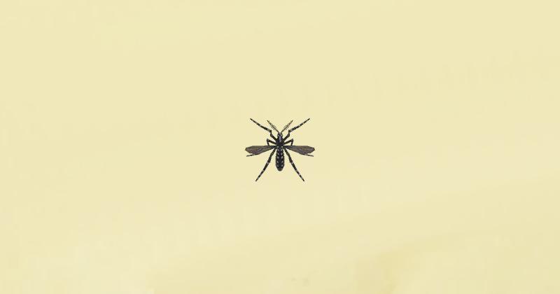 zanzara animal crossing new horizons