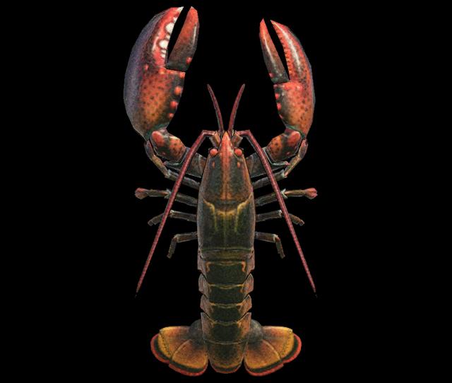 Astice Animal Crossing creature marine