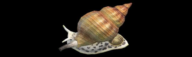Buccino Animal Crossing creature marine
