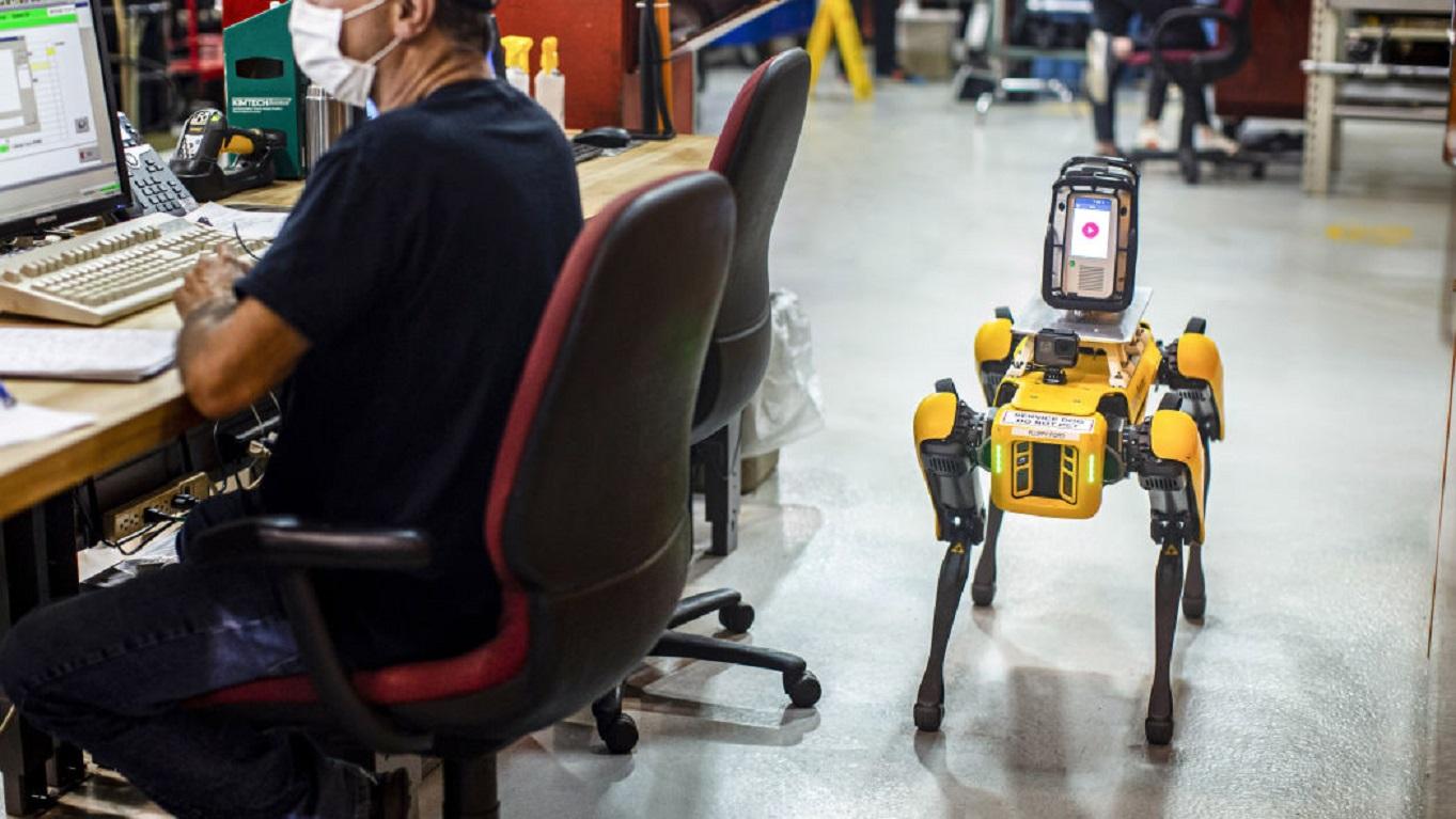 Due cani robot negli impianti Ford thumbnail