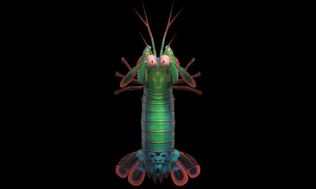 Gambero Mantide Animal Crossing creature marine