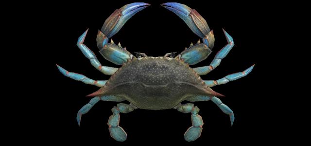 Granchio Gazami Animal Crossing creature marine