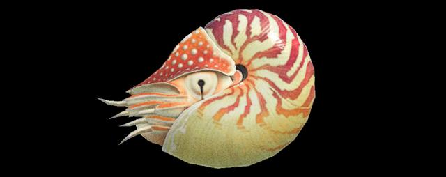Nautilus Animal Crossing creature marine