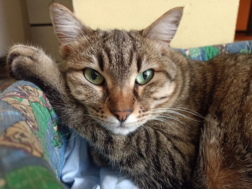 Oppo A91 macro gatto