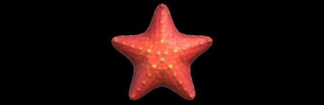 Stella marina Animal Crossing creature marine