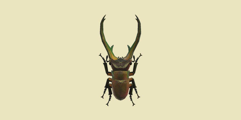 cervo volante cyclommatus animal crossing new horizons