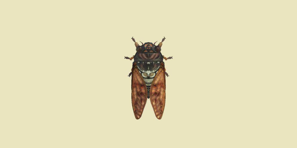 cicala marrone animal crossing new horizons