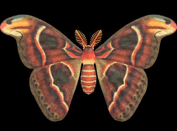 Farfalla Cobra Animal Crossing New Horizons