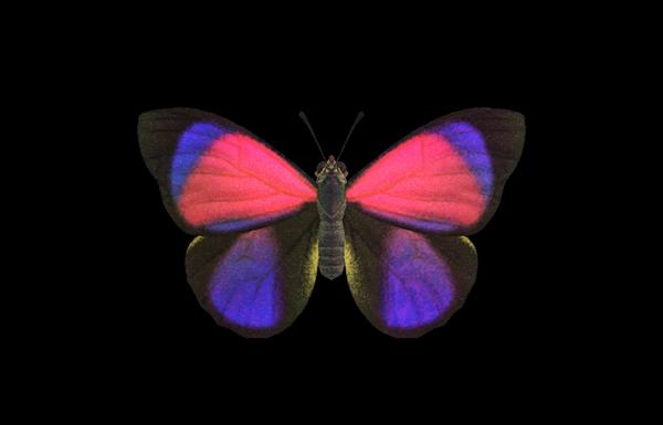 Farfalla agrias Animal Crossing New Horizons