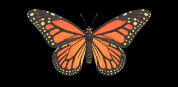 Farfalla monarca Animal Crossing New Horizons
