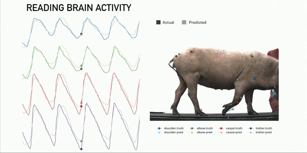 """""""È come un Fitbit nel tuo cranio"""": Elon Musk presenta la demo di Neuralink thumbnail"""