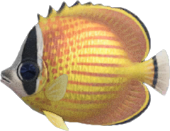 Pesce Farfalla Animal Crossing New Horizons