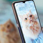 giornata mondiale gatto foto wiko