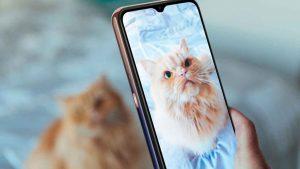 I consigli per delle ottime foto al proprio gatto Per celebrare la Giornata mondiale del gatto Wiko ha chiesto a due influencer italiane alcuni consigli per fare delle ottime foto al proprio felino