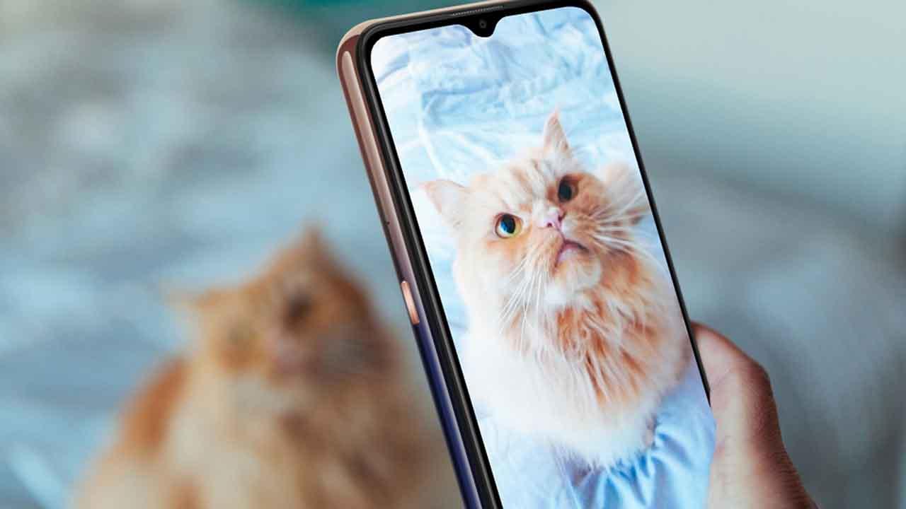 I consigli per scattare ottime foto al proprio gatto thumbnail