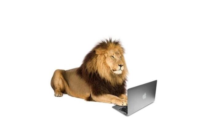 leone da tastiera