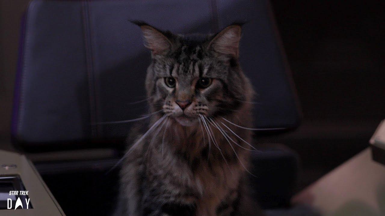 Star Trek: Discovery, un gatto tra i protagonisti della terza stagione thumbnail