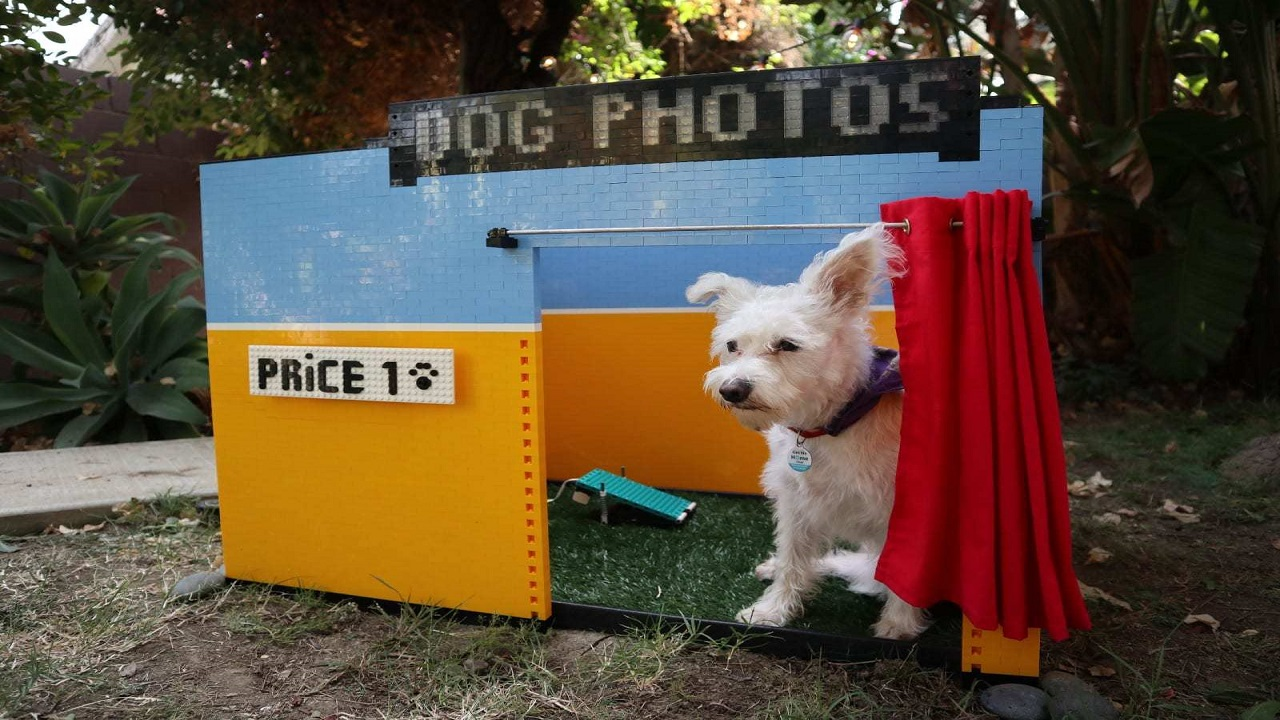 Ecco la nuova cabina dei selfie per i cani realizzata con LEGO Mindstorms thumbnail