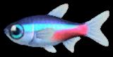 Pesce Neon Animal Crossing New Horizons