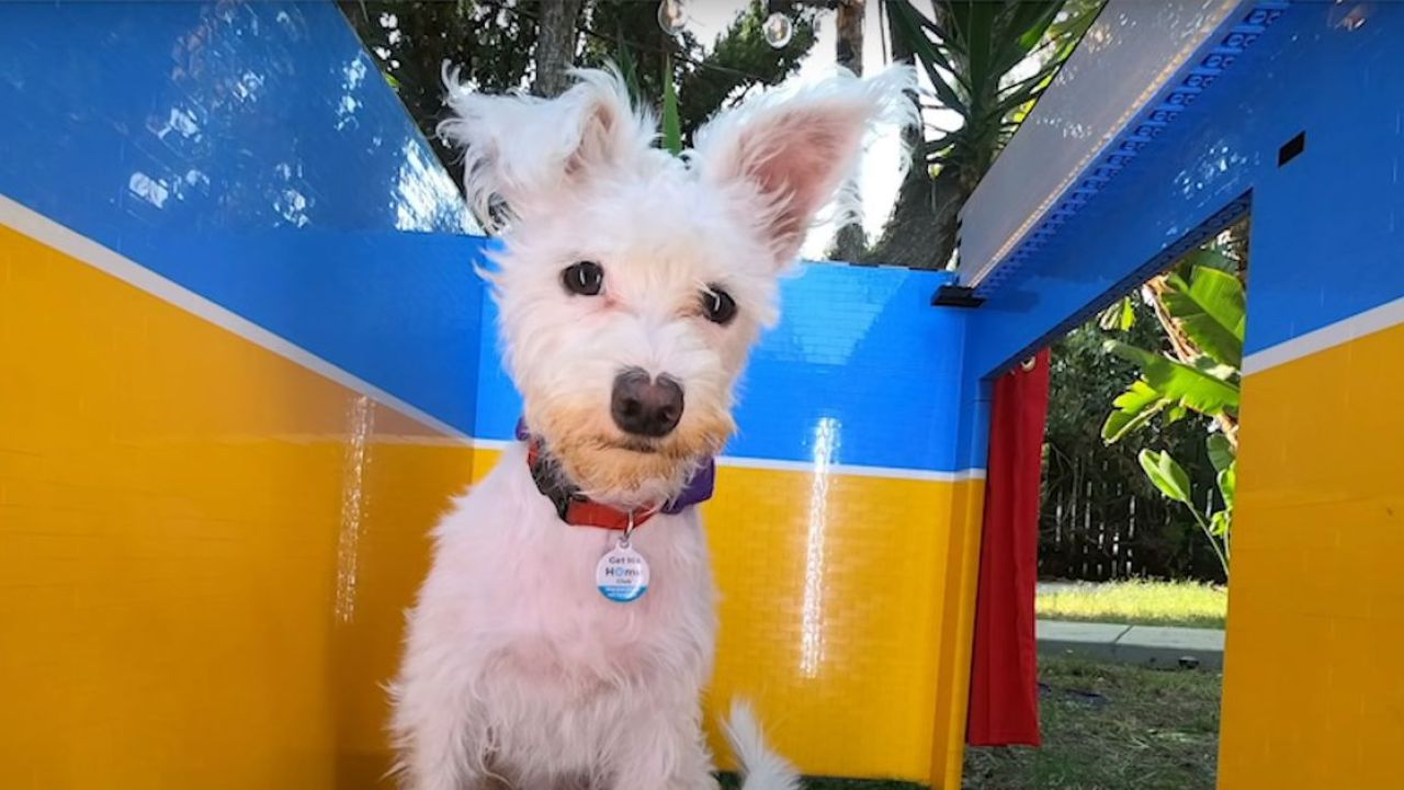 cabina-selfie-cani-lego-tech-princess