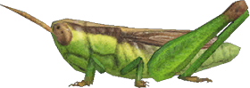 Locusta Animal Crossing New Horizons