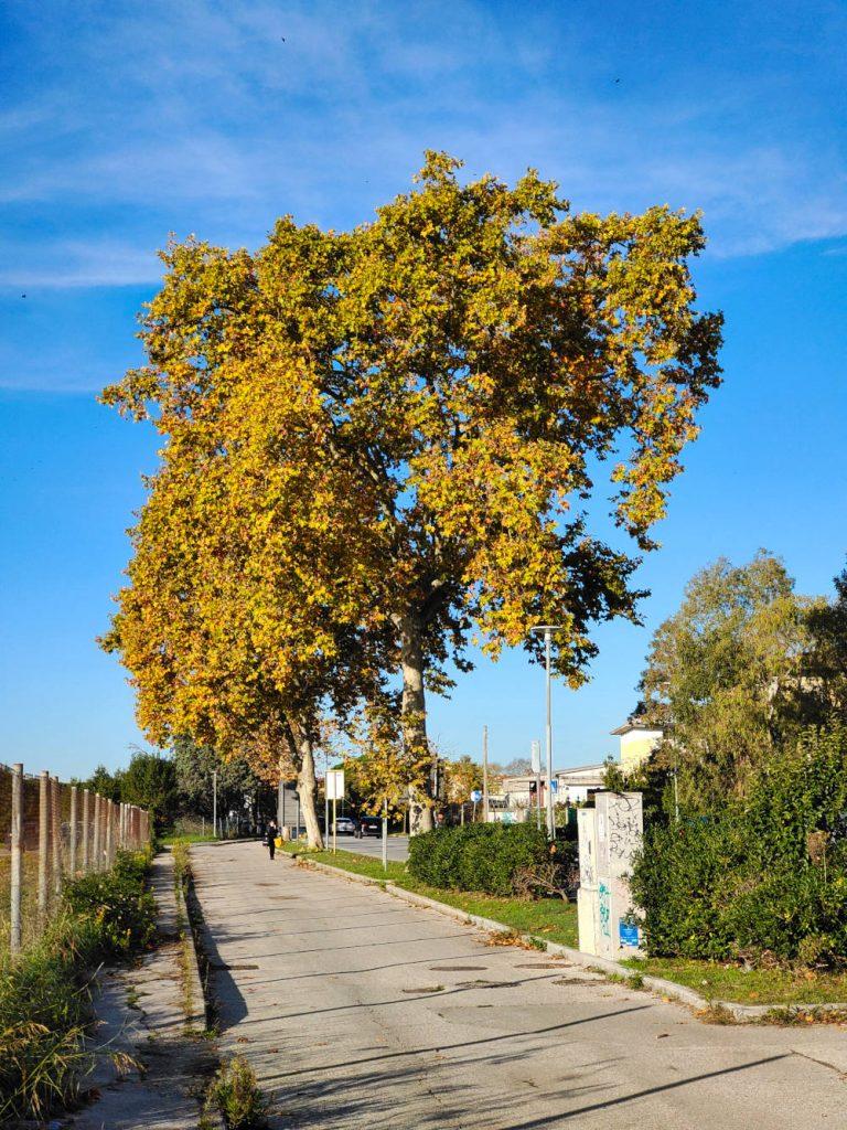 Vivo X51 5G recensione albero 2