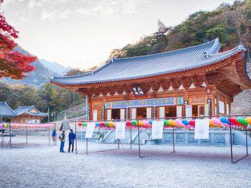 coreano-autodidatta-tempio-tech-princess