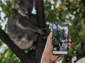 google ar koala-min